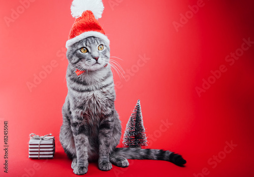 Fotobehang Kat Grey tabby cat wears Santa's hat on red background. Christmas and New year concept