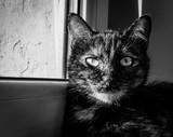 Kot - spojrzenie