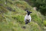 Lamb - 182472003
