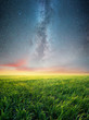 Grass on the field and night sky. Agricultural landscape in the summer time