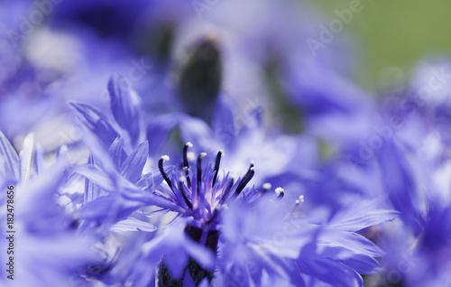 Abstract Flower Closeup