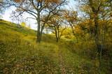 Oak grove on the mountainside in autumn. - 182484409