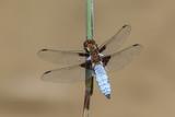 Libelle ganz nah - 182486461