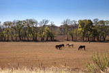 Horse farm in Rustic Texas