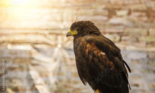 Plexiglas Eagle back side of eagle