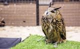 cute owl at zoo - 182506630