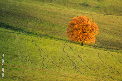 Foto op Canvas Herfst Autumn landscape with a beautiful deciduous tree.