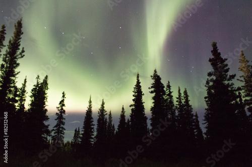 Fototapeta Northern lights across the black spruces on the Alaskan Range