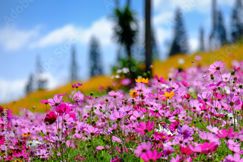 Flower garden on mountain field