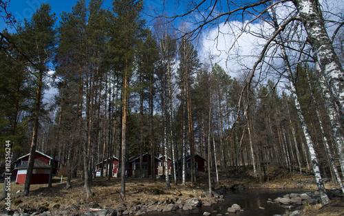 Bouleaux à Sahanlahti, Finlande