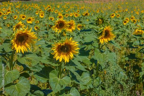Fototapeta flores