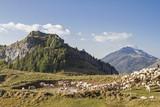 Schafherde im Monte Baldogebiet - 182543225