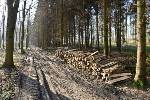 Tuinposter Weg in bos bois foret coupe chauffage printemps arbre Ardennes energie combustible environnement pollution ecologie nature