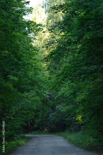 Aluminium Betoverde Bos Empty asphalt road in summer forest