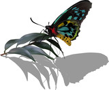 black and cyan butterfly with shadow