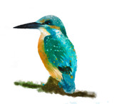 Kingfisher sittin on a branch, watercolor effect