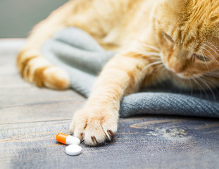 Red kitten and orange pills closeup