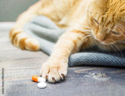 Red kitten and orange pills closeup - 182569222