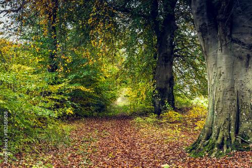 Tuinposter Weg in bos Waldlichtung im Herbst