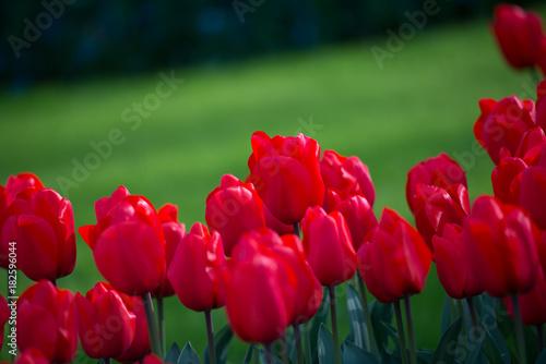 Fotobehang Bordeaux spring flowers field