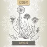 Dandelion aka Taraxacum officinale sketch. Hot drinks collection.