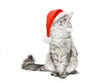 Grey cat in Santa Christmas red hat