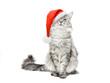 Grey cat in Santa Christmas red hat