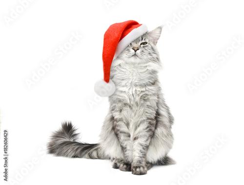 Fotobehang Kat Grey cat in Santa Christmas red hat