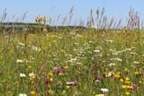 Wildblumenwiese - wildflower meadow - Sommerwiese