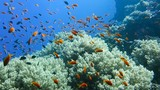 School of tropical fish in a colorful coral reef with water surface in background, Red sea, Egypt. Full HD underwater footage. - 182616088