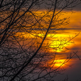 The vivid colors of the sunset seen through the bare branches of the trees - 182617622