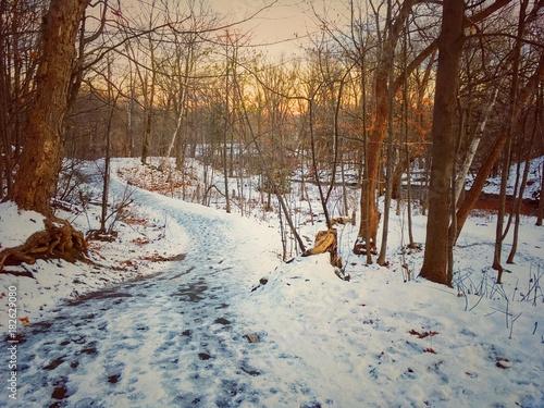Foto op Canvas Weg in bos hiver