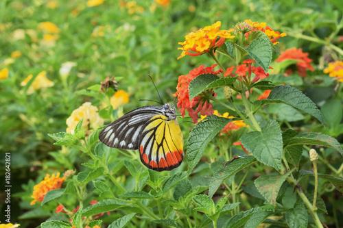 Fotobehang Vlinder Butterfly on flower in park