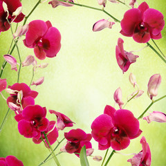 Beautiful pink orchid flower frame on green blurred background