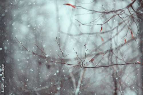 Wall mural Beautiful abstract blurred tree branch in the forest at snowy day.