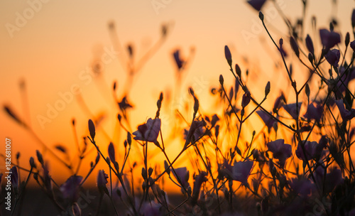 Foto op Plexiglas Oranje eclat flowers on the grass at sunset