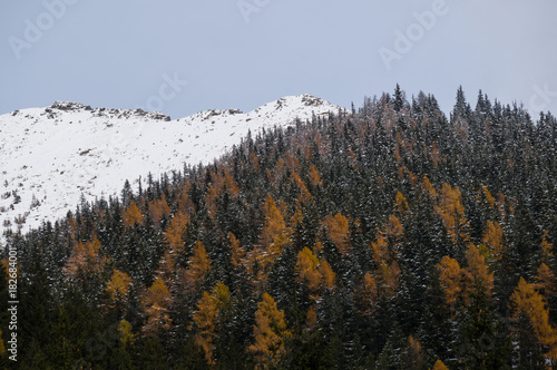 Foto op Aluminium Herfst Alpine forest in late autumn next to a snow covered ridge