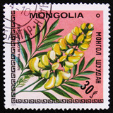 MOSCOW, RUSSIA - APRIL 2, 2017: A post stamp printed in Mongolia shows image flowers with the inscription Sophora alopecuroides, circa 1979 - 182688051