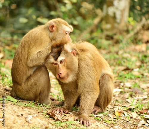 Fotobehang Aap two of monkey take care each other in wild forest