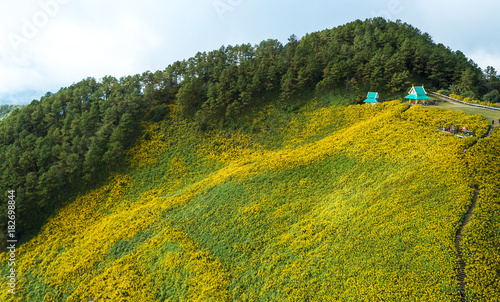 Plexiglas Honing Aerial view over Mexican sunflower field in Tung Bua Tong in Maehongson (Mae Hong Son) Province, Thailand.
