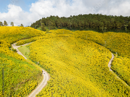 Aluminium Oranje Aerial view over Mexican sunflower field in Tung Bua Tong in Maehongson (Mae Hong Son) Province, Thailand.