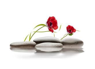 spa de flores y piedras sobre agua
