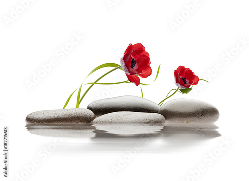 spa kwiatów i kamieni na wodzie