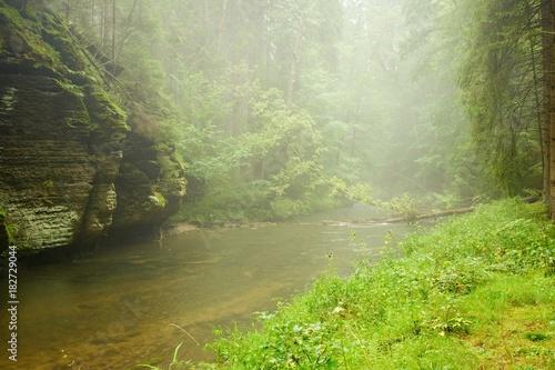 Papiers peints Rivière de la forêt River in rain and fog
