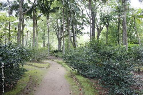 Fotobehang Weg in bos Parque Terra Nostra, Açores
