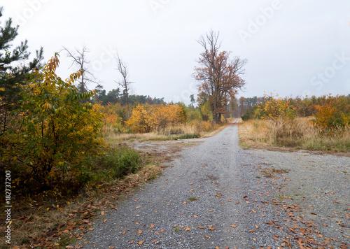 Staande foto Weg in bos Paleta kolorów złotej jesieni w puszczy