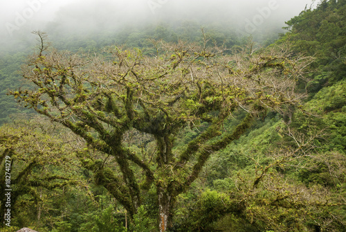 Fotobehang Natuur Tree and fog in Costa Rico