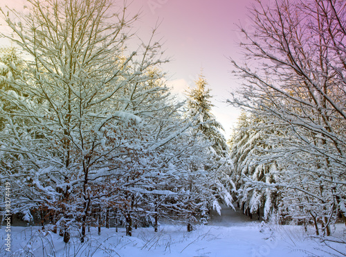Fotobehang Lichtroze Winter Trees with snow .Christmas background.