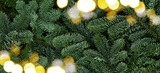 Christmas background with fresh evergreen tree banches banner - 182744019