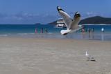 Möve im Strandflug - 182751414